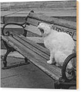 Cat On A Bench Wood Print