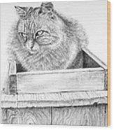 Cat On A Box Wood Print