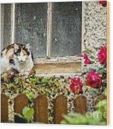 Cat On A Sill Wood Print