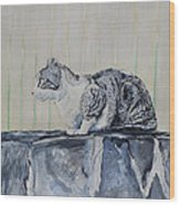 Cat On A Stone Wall Wood Print