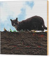 Cat On A Wall Wood Print