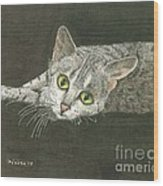 Cat On Black Wood Print by Bill Hubbard
