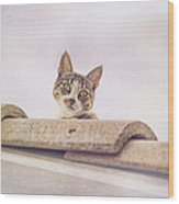 Cat On The Hot Tin Roof Wood Print
