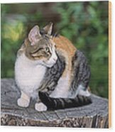 Cat On Tree Trunk Wood Print