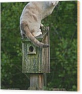 Cat Perched On A Bird House Wood Print
