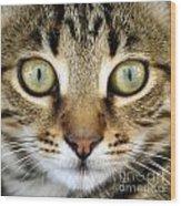 Cat Portrait Macro Shot Wood Print