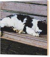 Cat Sleeping On Bench Wood Print