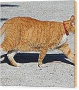 Cat Walk Wood Print