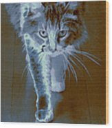 Cat Walking Wood Print