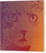 Cat With Intense Stare Abstract  Wood Print