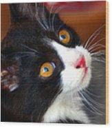 Innocent Kitten Wood Print