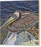 Catalina Pelican Wood Print