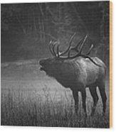 Cataloochee Bull Elk Wood Print