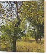 Catalpa Wood Print