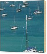 Catamaran  St Thomas Usvi Wood Print by Amy Cicconi
