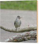 Catbird And Nest Material Wood Print