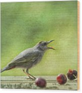 Catbird Eating Cherries Wood Print