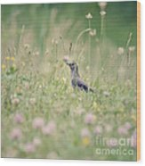 Catbird In The Wildflowers Wood Print