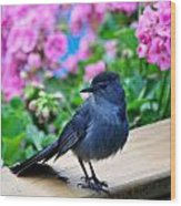 Catbird On Hunt Wood Print