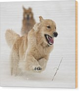 Catch Me If You Can Wood Print by Vic Harris