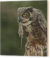 Catch Of The Day - Great Horned Owl  Wood Print by Inspired Nature Photography Fine Art Photography