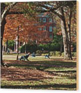 Catching Rays - Davidson College Wood Print