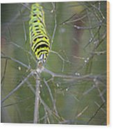 Caterpillar On Fennel In The Morning Dew Wood Print