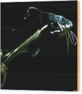 Catfish Are Jumpin Wood Print