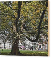 Cathedral Square - Exeter Wood Print