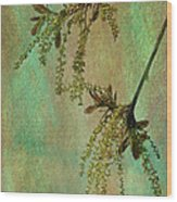 Catkins -- Tree-flowers Wood Print
