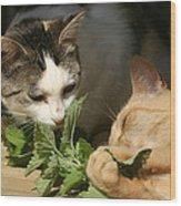 Catnip Anyone Wood Print
