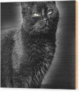 Cats 55 Wood Print