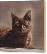 Cats 57 Wood Print
