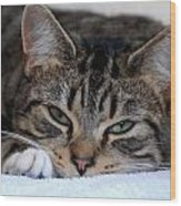 Cats 61 Wood Print