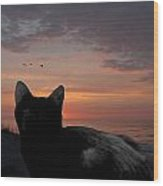 Cats 65 Wood Print