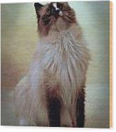 Cats 71 Wood Print by Joyce StJames