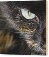 Cats Eye Wood Print