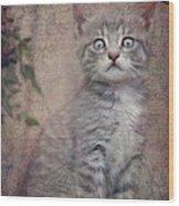 Cat's Eyes #02 Wood Print