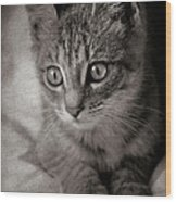 Cat's Eyes #05 Wood Print