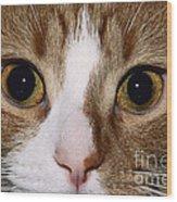 Cats Face Wood Print