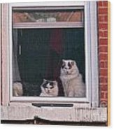 Cats On A Sill Wood Print