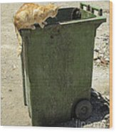 Cats On And In Garbage Container Wood Print