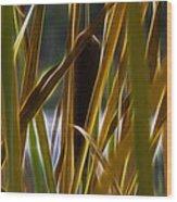Cattail 2 Wood Print