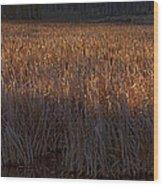 Cattail Bog   #3868 Wood Print