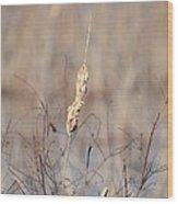 Cattail Gold Wood Print