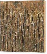 Cattail Marsh Wood Print