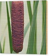 Cattail  Wood Print