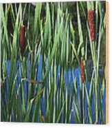 Cattail Pond In Pastel Wood Print