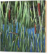 Cattail Pond In Watercolor Wood Print