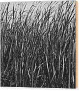 Cattail Reed Background Wood Print